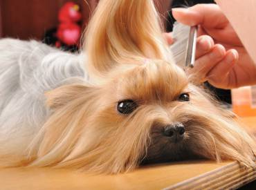 Trendy Hairstyles For your Dog